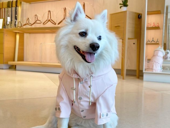 White fluffy dog wearing pink rain coat from Wag Swag brand